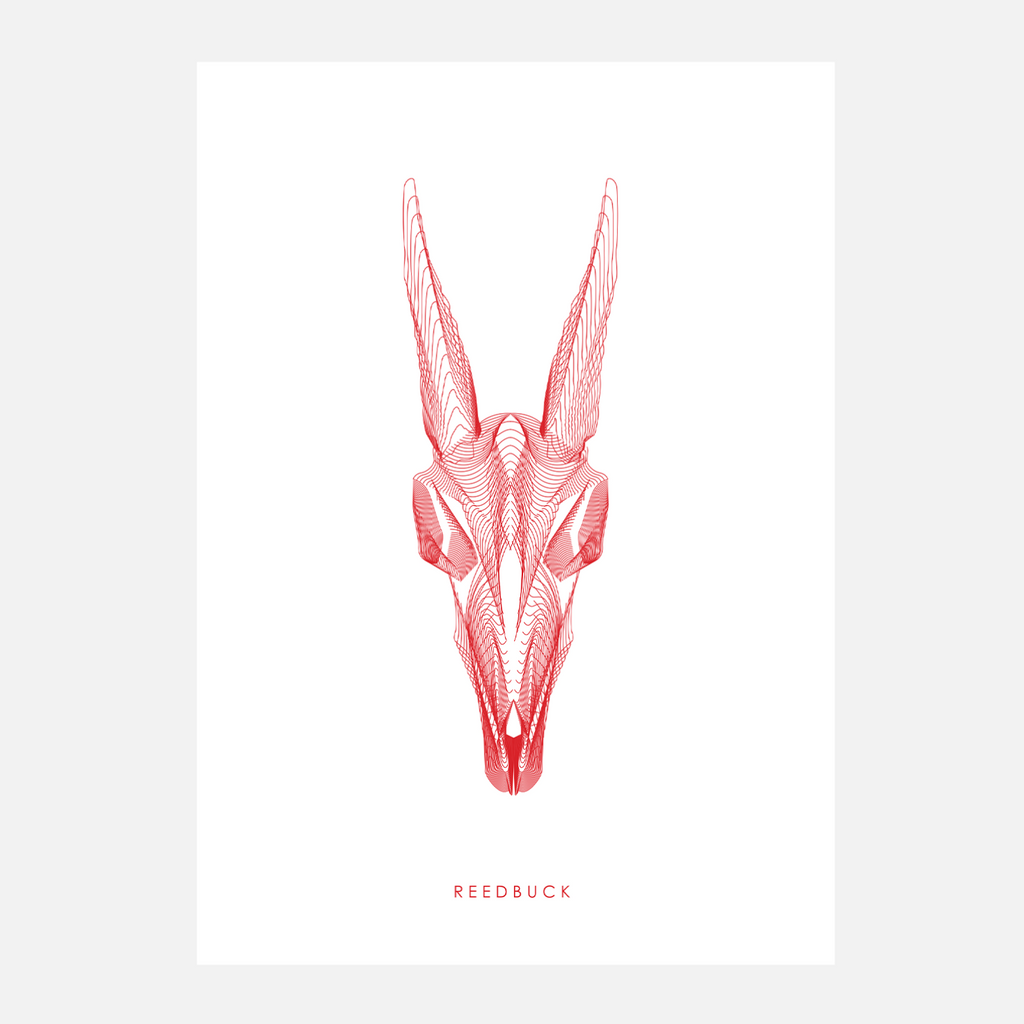 Horned Buck Print - Reedbuck
