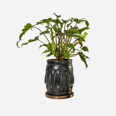 Unity Planter - Black / Bronze