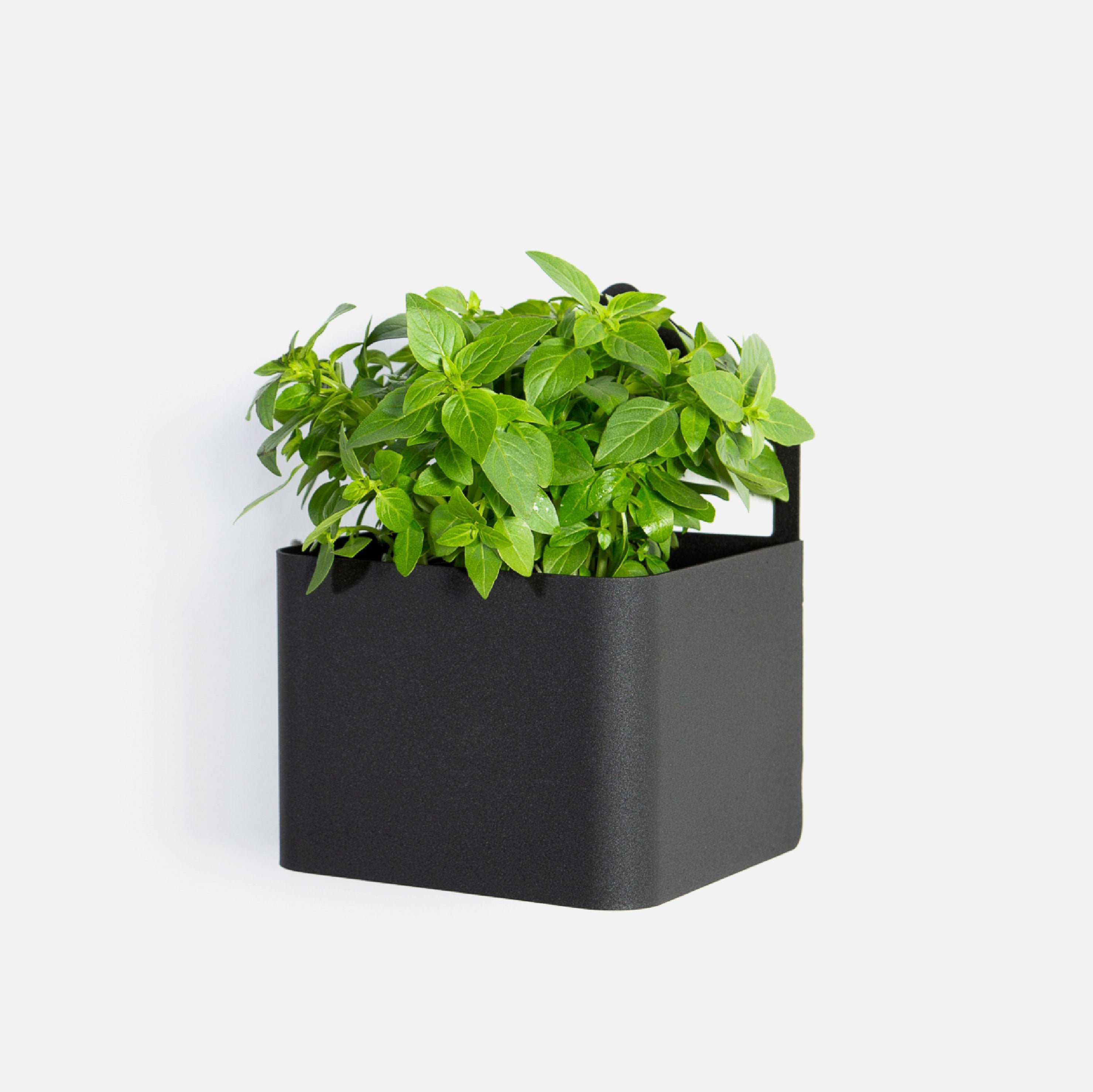 Sucasa Herb Box