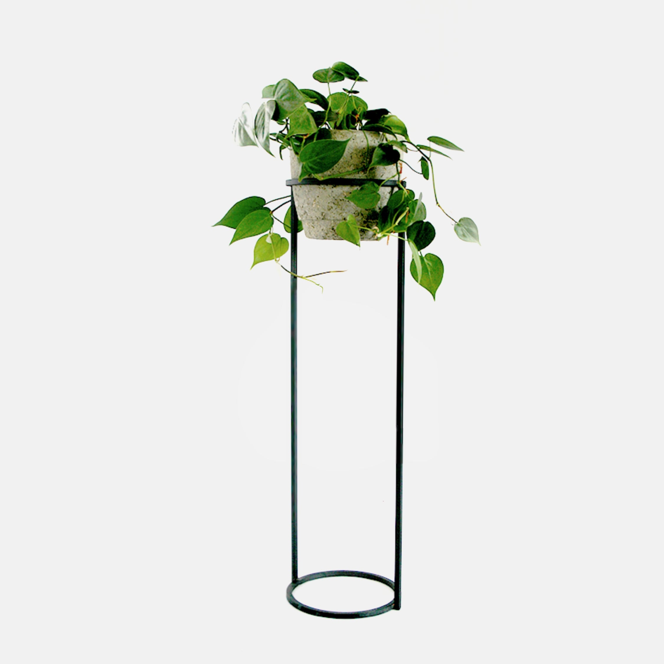 Halo Plant Stand