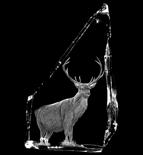 Scottish Stag Specialist Hand Engraved on Crystal Cullet