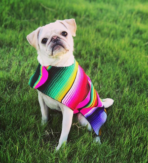 BAP Serape Dog Poncho -  - Pet Clothing - Feliz Modern