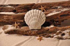 Scallop Sand Magnet