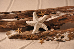 STARFISH, MARINE ANIMAL, STAR-SHAPED, MARINE CREATURES, SAND MAGNET, TROPICAL DECORATIONS, COASTAL MAGNET, BEACH COTTAGE ORNAMENTATION, MADE IN FLORIDA, BEACH LOVER GIFTS, BEACH SAND KEEPSAKES, VACATION SOUVENIR, GIFT SHOP OWNERS, PROMOTIONAL ITEMS, PARTY FAVOR, SPECIAL EVENT, COLLECTIBLES, HAND-CRAFTED, FUNDRAISER, THREE-DIMENSIONAL, MAGNET