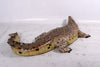 Crocodile Mouth Closed Life Size Reptile Prop Resin Decor Statue