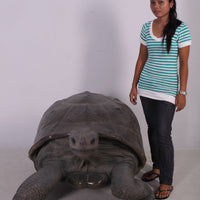 Galapagos Tortoise Over Sized Statue
