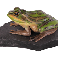 Bell Frog On Rock Life Size Statue
