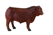 Cow Bull Angus Farm Prop Life Size Decor Resin Statue
