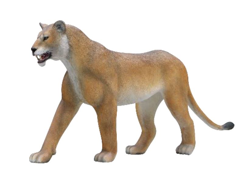 Lion Lioness Walking Safari Prop Life Size Resin Statue - LM Treasures Prop Rentals