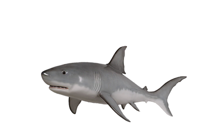 Small Hanging Great White Shark Life Size Statue