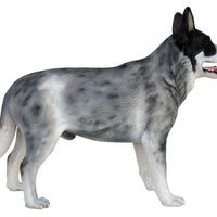 Dog Blue Heeler Animal Prop Life Size D̩ecor  Resin Statue - LM Treasures Prop Rentals