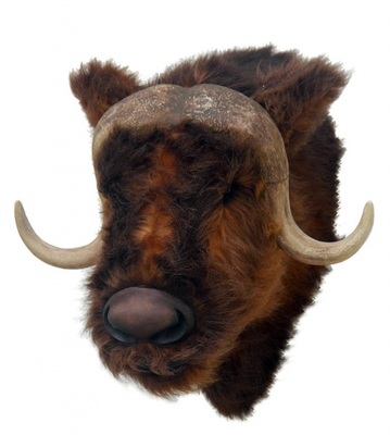 Bull Muskox Head Cow Farm Prop Life Size Decor Resin Statue - LM Prop Rentals