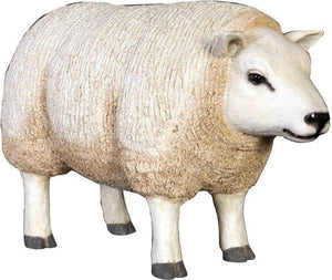 Sheep Ewe Texelaar Baby Head Up Farm Prop Resin Decor Statue - LM Treasures Prop Rentals