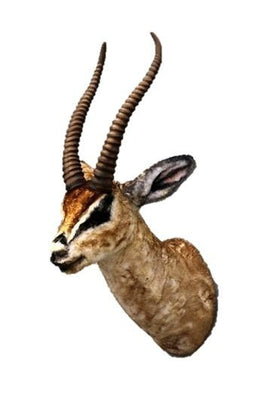 Gazelle Head Wall Mount Brown Forest Prop Life Size Decor Resin Statue - LM Prop Rentals