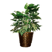 Artificial Foliage Plant 3 ft Jungle Safari Prop Decor - LM Treasures Prop Rentals