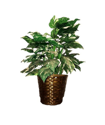Artificial Foliage Plant 3 ft Jungle Safari Prop Decor - LM Prop Rentals