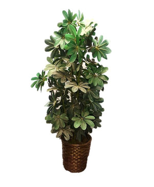 Artificial Foliage Plant Schefflera 4 ft Jungle Safari Prop Decor - LM Treasures Prop Rentals
