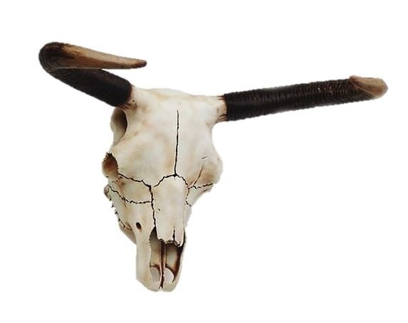 Bull Skull Small Cow Farm Prop Life Size Decor Resin Statue - LM Prop Rentals
