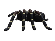 Insect Spider Tarantula Over Sized Bug Prop Resin Decor Statue - LM Prop Rentals