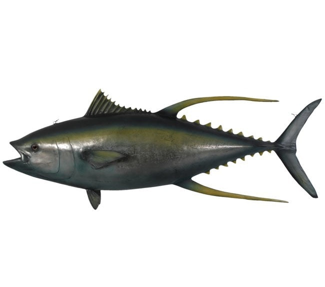 Yellow fin Tuna Statue Wall Hanging Display - LM Treasures Prop Rentals