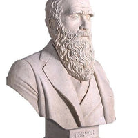 Bust Stone Darwin Greek Roman Prop Resin Decor - LM Prop Rentals