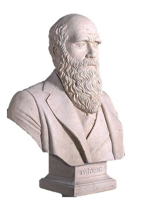 Bust Stone Darwin Greek Roman Prop Resin Decor - LM Treasures Prop Rentals