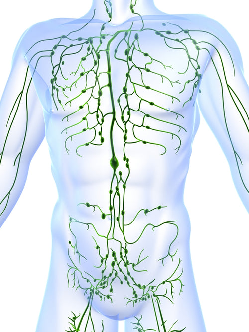 z- Lymphatic Drainage Training