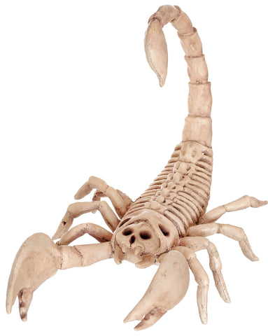 "9"" Scorpion Skeleton - Willow Manor Shop"