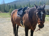bitless bridle and reins with DP leather headstall