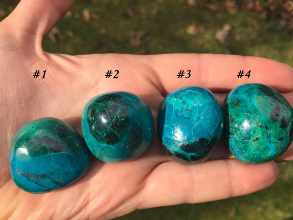 Chrysocolla ~ Extra Large - Gem Realm
