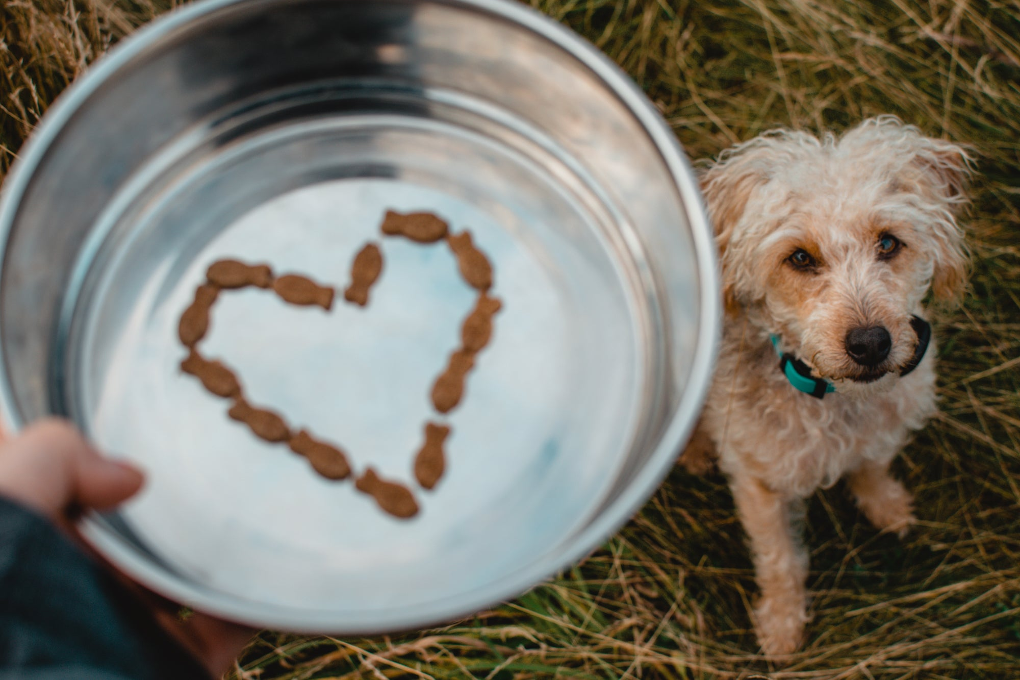 Feeding your dog: How much and how often?
