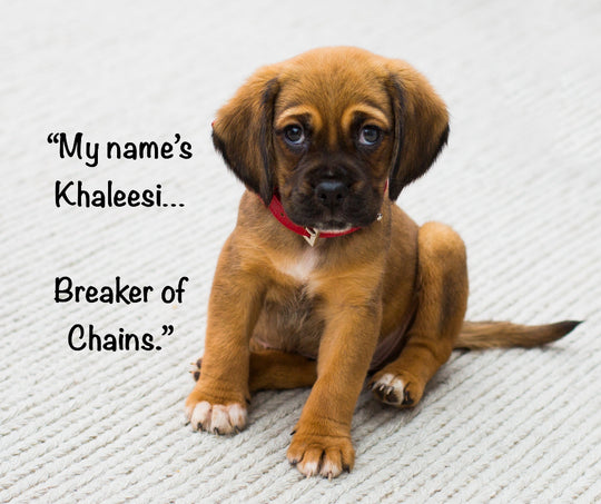 Puppy with the name Khaleesi, Breaker of Chains.