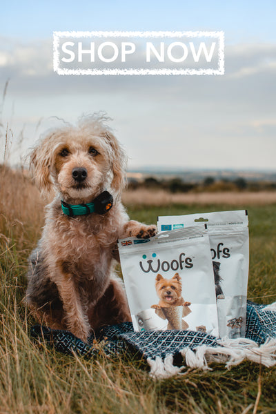 Jackapoo sitting with woofs dog treats pouches