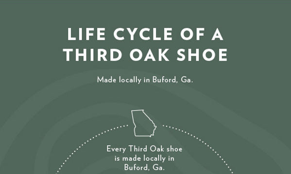 Life Cycle of A Third Oak Shoe