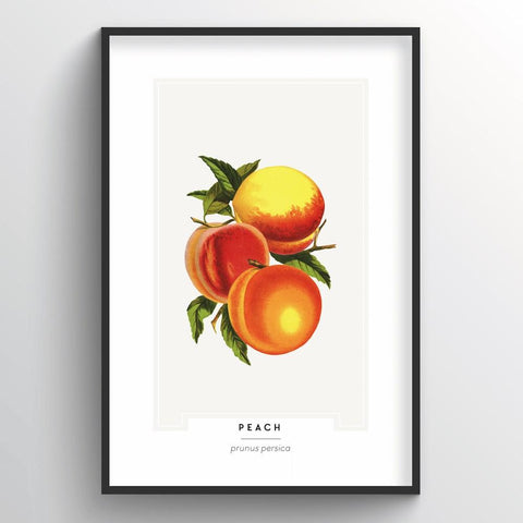 Peach Botanical Wholesale Art Prints