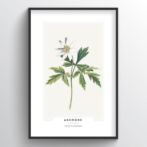 Anemone Botanical Wholesale Art Prints