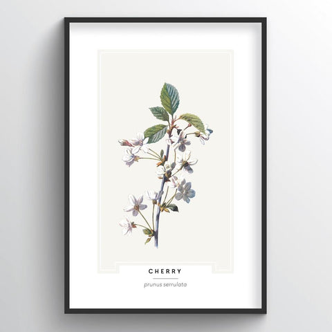 Cherry Blossom Botanical Wholesale Art Prints
