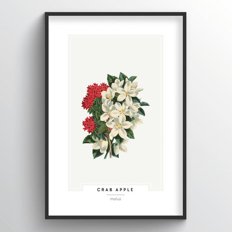 Crab Apple Botanical Wholesale Art Prints