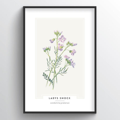 Ladys Smock Botanical Wholesale Art Prints