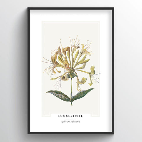 Loosestrife Botanical Wholesale Art Prints