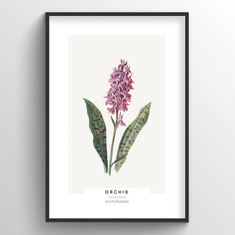 Orchid Botanical Wholesale Art Prints
