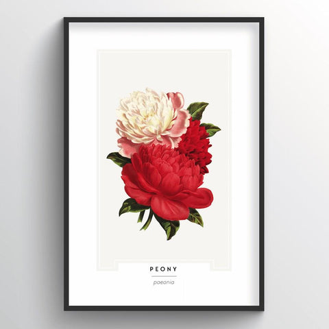 Peony Botanical Wholesale Art Prints