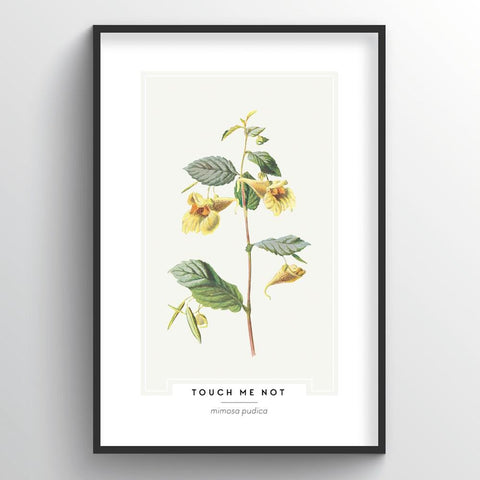 Touch Me Not Botanical Wholesale Art Prints