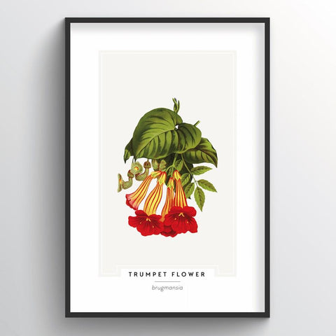 Trumpet Flower Botanical Wholesale Art Prints