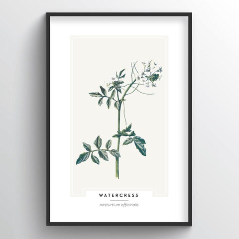 Watercress Botanical Wholesale Art Prints