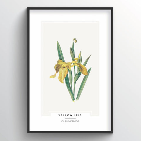 Yellow Iris Botanical Wholesale Art Prints