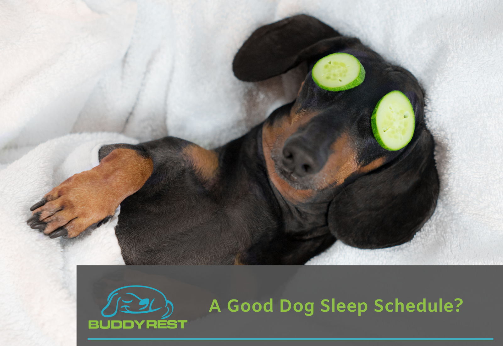 A Good Dog Sleep Schedule?
