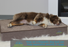 How an orthopedic dog bed can help separation anxiety in dogs