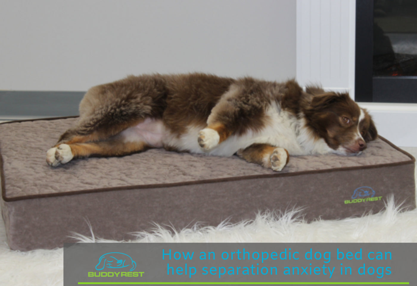 How an orthopedic dog bed can help separation anxiety in
