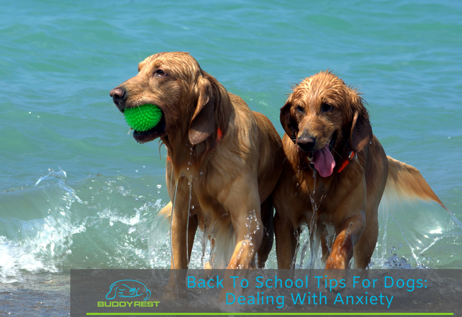 Back to school tips for dogs: Dealing with anxiety